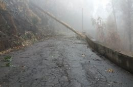 Tree blocks road.